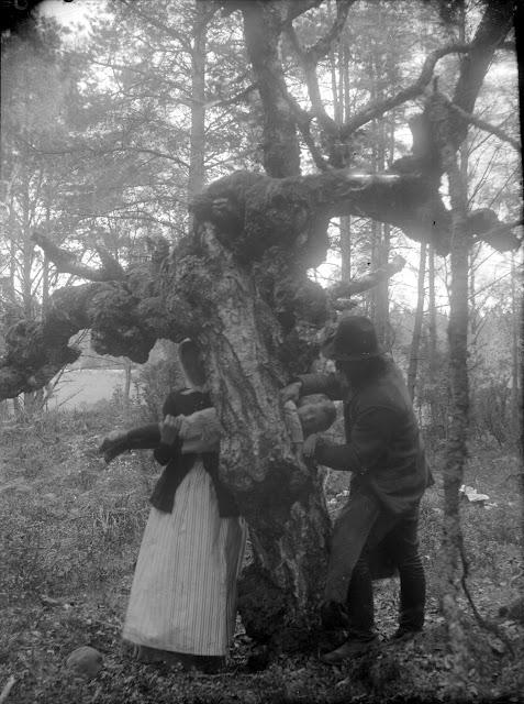 Transfiriendo el raquitismo a un árbol.