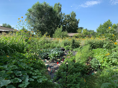 Backyard full of plants