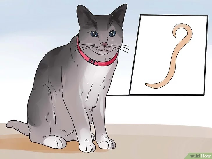 Lungworm in cats and methods of treatment | cats and dogs