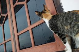 Ada Kucing di Jendela
