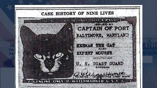 Pasaporte de gato