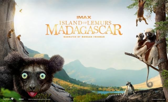 Ring tailed Lemurs, Sifaka, movie