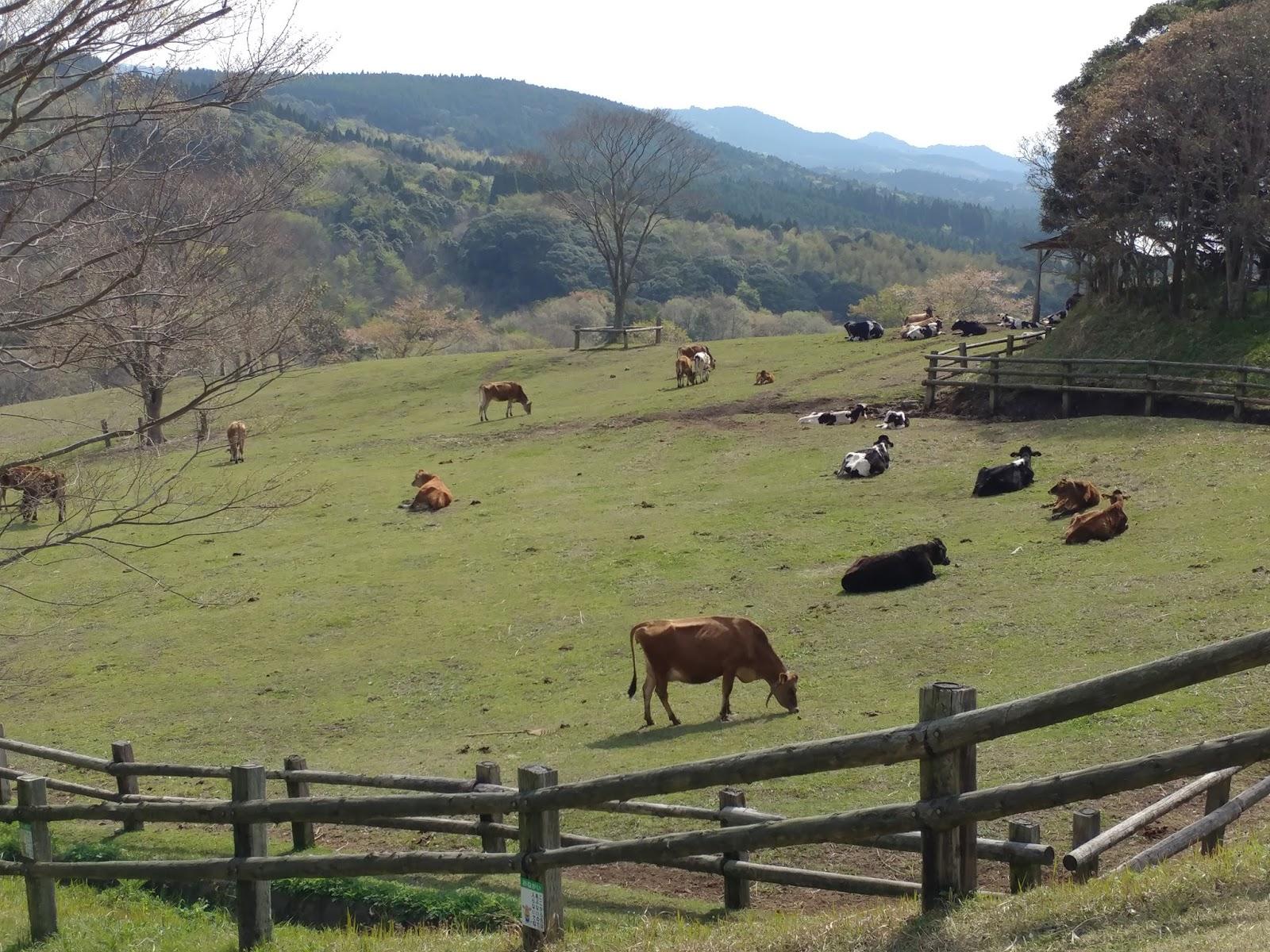 「高千穗牧場」的圖片搜尋結果