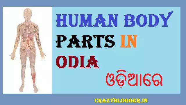 Human Body Parts Name in Odia | All Body Parts Name in Odia