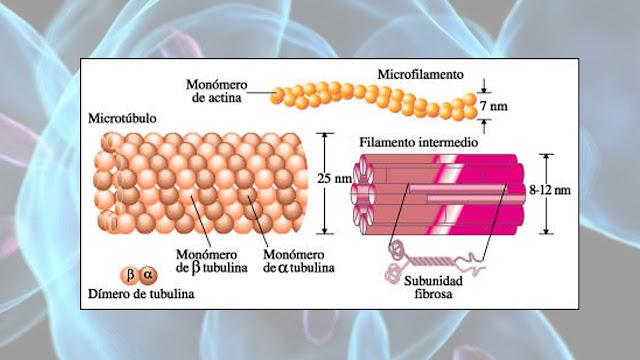 partes de la celula humana