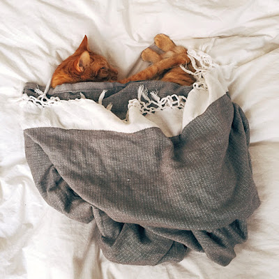 A ginger cat is curled up on a bed underneath a grey and white blanket