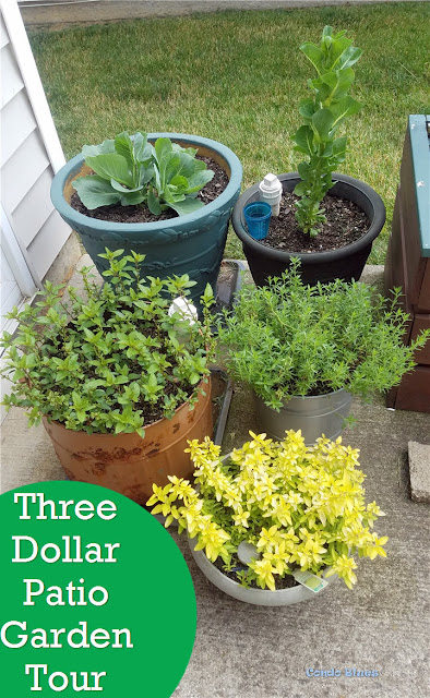 three dollar patio vegetable garden