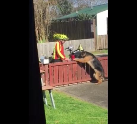 Grabó a cartero que se para a jugar con su perro cada día