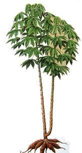 Informasi Belajar Anak Interaktif Jenis Pohon Dengan Daun Tunggal