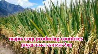 major crop producing countries   (प्रमुख फसल उत्पादक देश)  उत्पादन के आधार पर चीन दुनिया का सबसे ज्यादा फल उत्पादन करने वाला देश है। चीन ने वर्ष 2020 में कुल 134,250 हजार टन फलों का उत्पादन किया था। दुनिया में 5 सबसे ज्यादा फल उत्पादन करने वाले देशों में 4 विकासशील हैं।