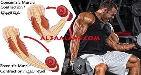تضخيم العضلات بسهولة . أطعمة لتضخيم العضلات . التّركيز على الحَركة السِّلبِيّة . الزِّيادة التّدريجية في الأَوزان. زيادة وقت الرّاحة بين المَجموعات ...