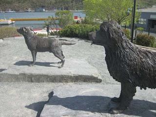 Newfoundland & Labrador Dogs.