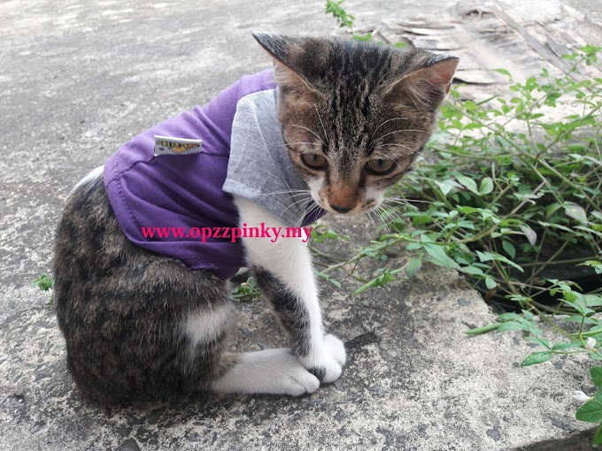 8 Gambar Kucing pakai Baju..Comeyyy tau