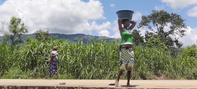 La sequía en Àfrica ha afectado la productividad de los cultivos de cereales.WMO/Cornel Vermaak