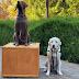 Δύο αγάλματα για τον σκύλο του πρώην Προέδρου