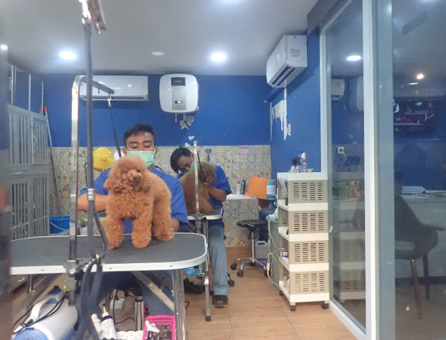 salon khusus anjing