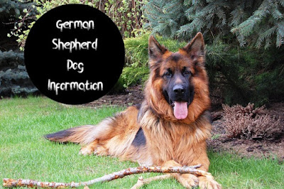 German Shepherd Dog Information