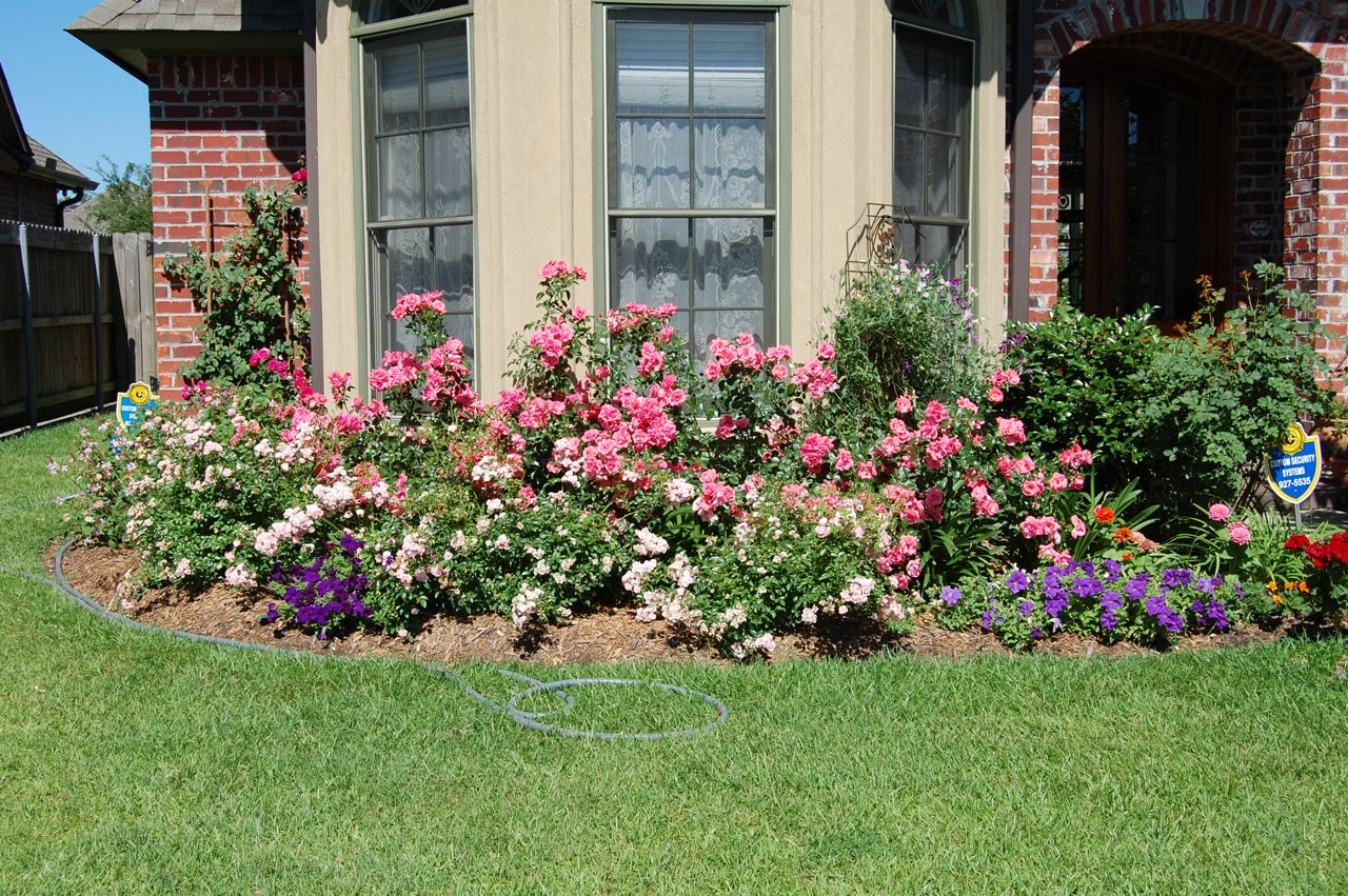 Jeannie S Fairy Rose Louisiana Garden Lantana In My Front