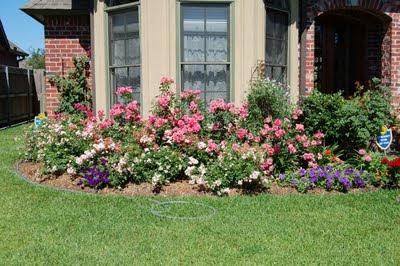 Jeannie's Fairy Rose Louisiana Garden: May 2011