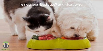 Is dog food bad for cats? and vice versa