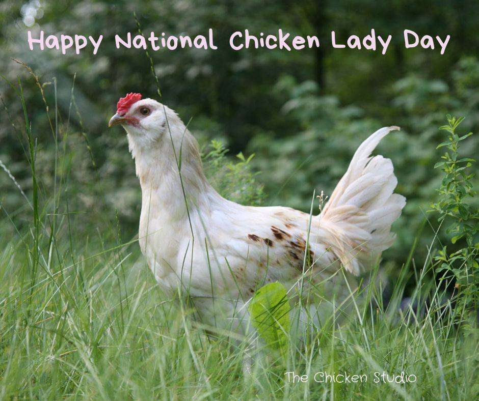 National Chicken Lady Day Wishes