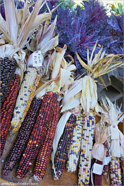 Decoraciones de Maíz en Wilson Farm, Lexington