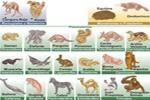 Clasificación taxonómica de los mamíferos