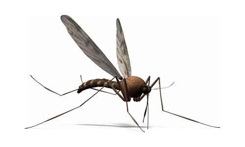 Un mosquito en la historia de Veracruz