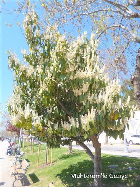 baharda çiçek açan ağaçlar