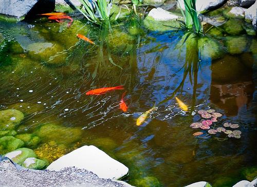 Fish Pond Design Type