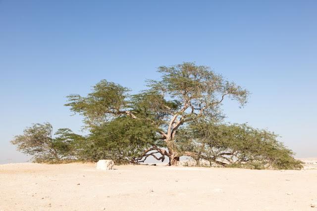 صور اشجار غريبة ، اغرب اشجار في العالم، اجمل اشجار ، صور اشجار