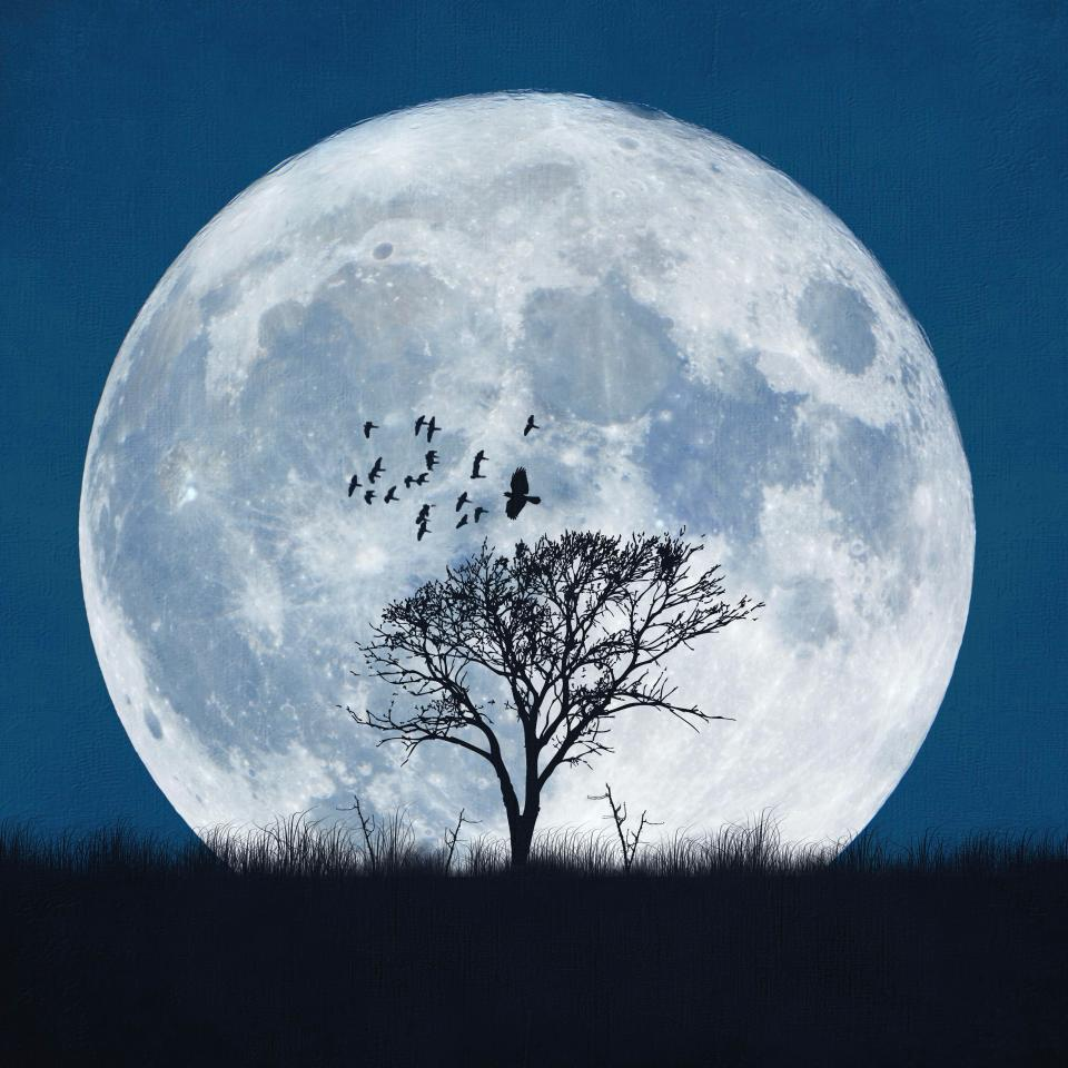 Full Moon: From New Moon To Full Moon To New
