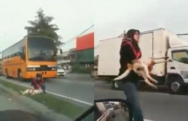 Wanita Bertudung Selamatkan Anjing