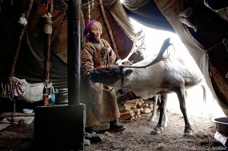 reindeer people Dukha people Hamid Sardar-Afkhami-5