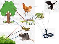 Penggunaan Pestisida Berisiko Merusak Rantai Makanan Alami