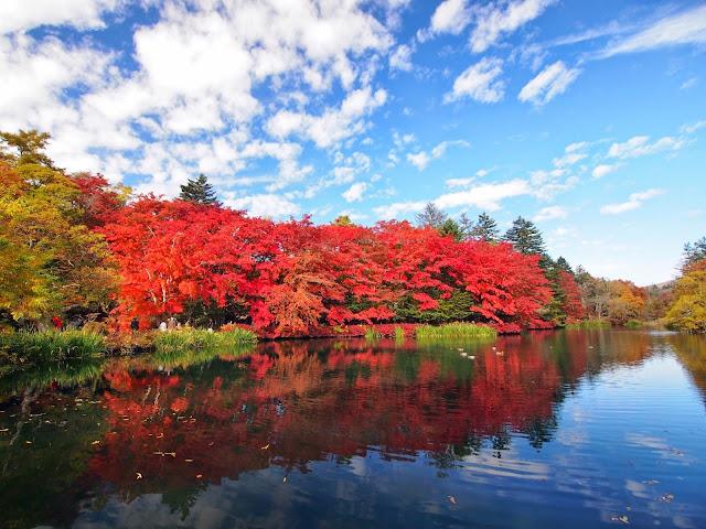 軽井沢 雲場池 紅葉