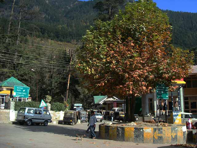 New Chinar trees planted to attract tourists to Srinagar