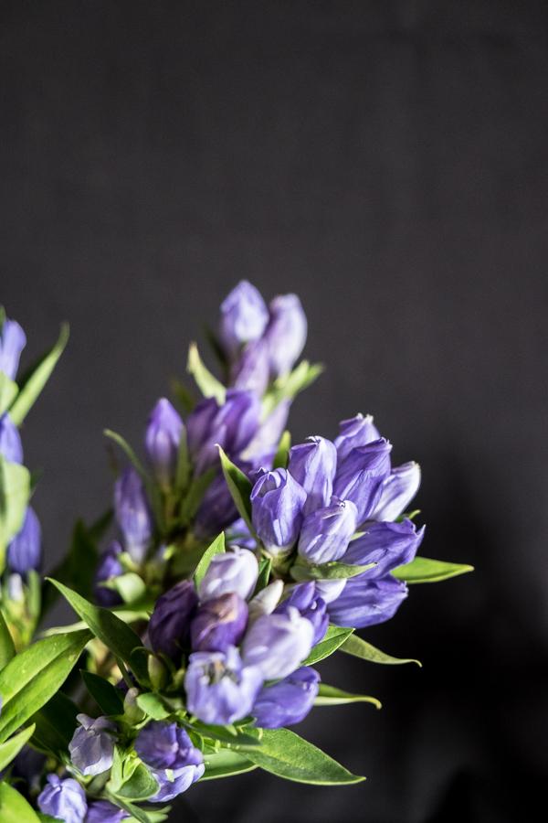 fim.works | Fotografie. Leben. Wohnen. | Mal wieder was Blaues in der Vase: Enzian!