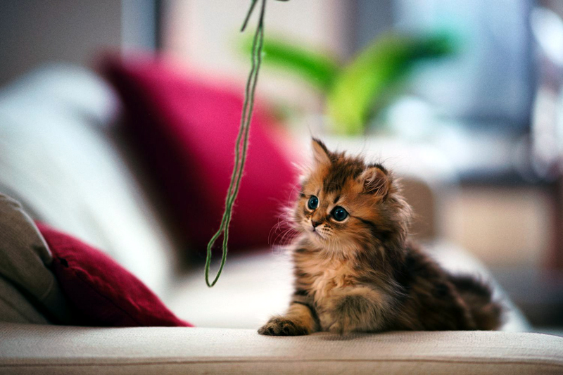 Why Yarn Is Not a Safe Toy for Cats?