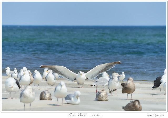 Crane Beach: ... me too...