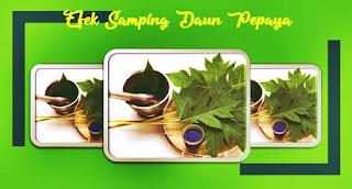 efek samping daun pepaya
