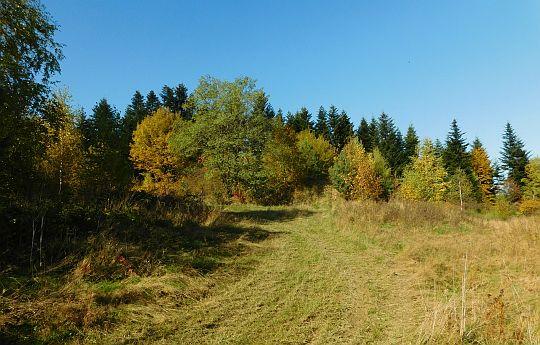 Trzebuńska Góra (625 m n.p.m.).