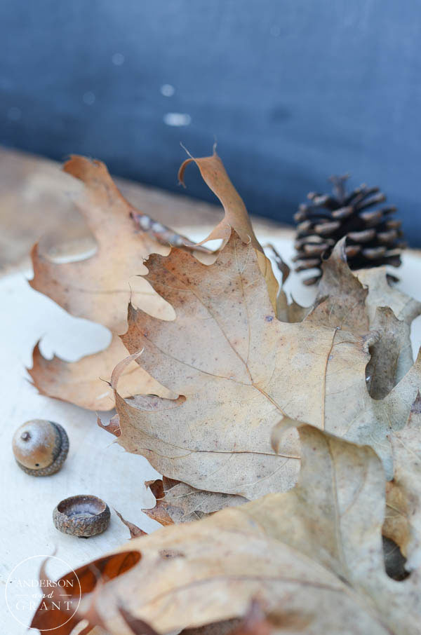 These beautifully colored leaves dried naturally on an oak tree.  |  www.andersonandgrant.com