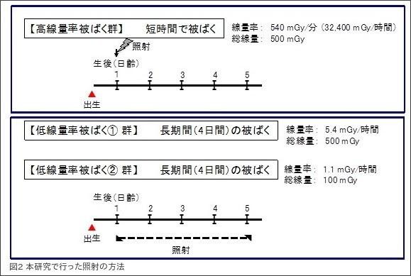 http://www.qst.go.jp/information/itemid034-001353.html