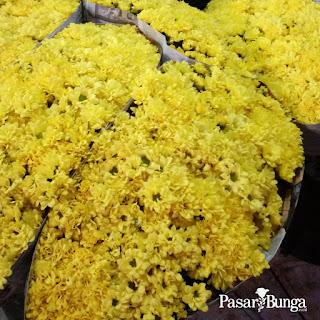Bunga ester - pasarbunga.co.id