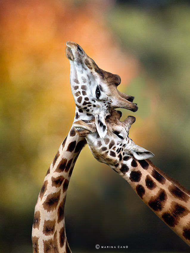Welcome To Animal Cognizance: Wildlife Photography By