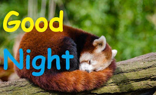 good night images with cute teddy panda