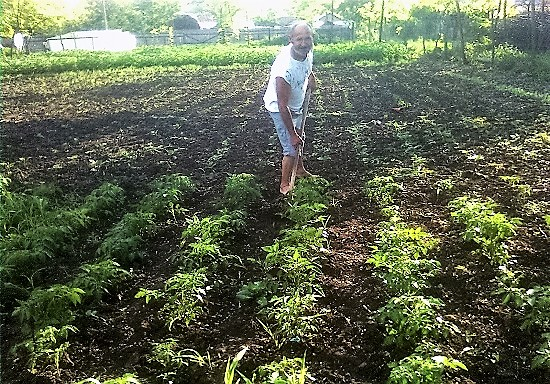 intretinerea plantelor cu sapa printre randuri si pe rand