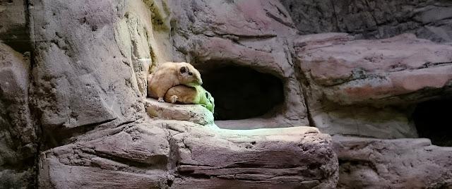 Bester Zoo Europas