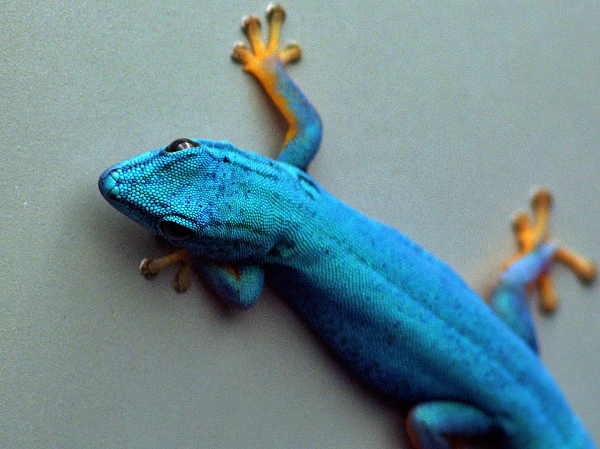 #006 Minolta Rokkor f1.4 50mm – Reptilien